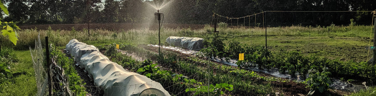 Vegetable Gardens with sprinkler