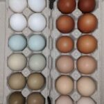 Eggs Rainbow Coloured
